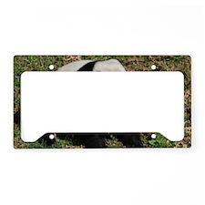 Awkward Sitting Panda Bear License Plate Holder