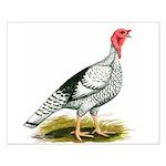Royal Palm Hen Turkey Small Poster