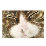 "Sleeping Cat ""Kiki"" - Postcards (Package of 8)"
