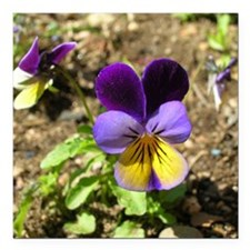 "Pansy Square Car Magnet 3"" x 3"""