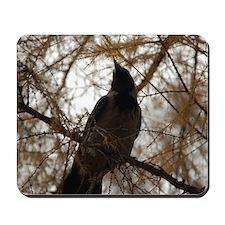 Kiev Crow Mousepad