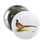 "Ringneck Pheasant 2.25"" Button (10 pack)"