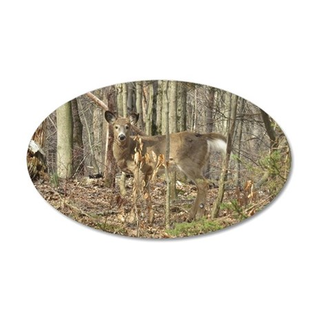 Whitetail Deer 35x21 Oval Wall Decal
