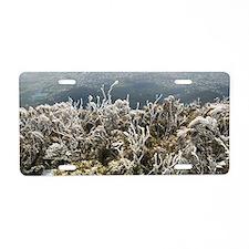 hoar frost plants Aluminum License Plate