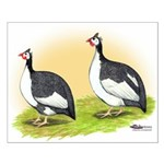 Pied Guineas Small Poster