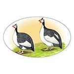 Pied Guineas Oval Sticker