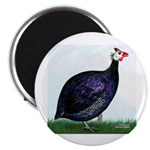 Royal Purple Guineafowl 2.25