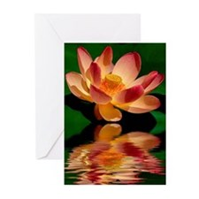 Lotus Blossom Greeting Cards (Pk of 20)