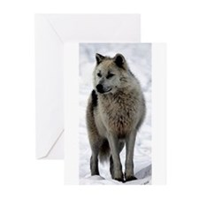 Arctic Wolf Portrait Greeting Cards