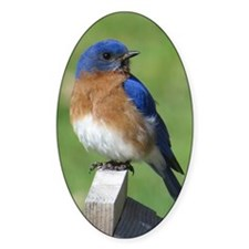 Bluebird Decal