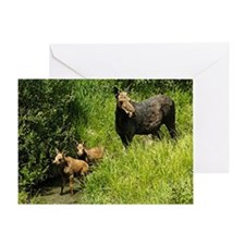 Moose Cow With Twins Greeting Cards