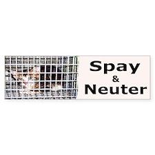 Cute Animal rights cats Bumper Sticker