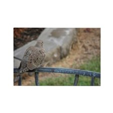 Turtle Dove Rectangle Magnet