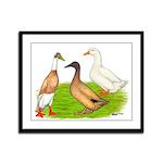 Egg and Meat Ducks Framed Panel Print