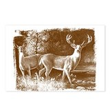 Deer Postcards