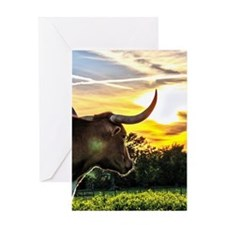 Illuminated Longhorn Sunset Greeting Cards