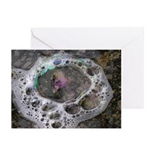 ...Bubbles... Note Cards (Pk of 10)