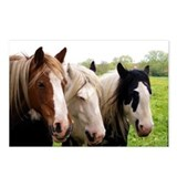 Three Horses Postcards (Package of 8)