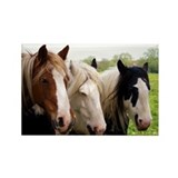 Three Horses Rectangle Magnet (10 pack)