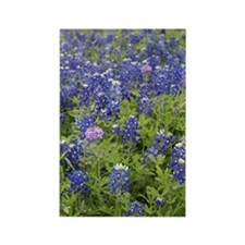 Bluebonnet Rectangle Magnet