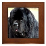 Newfy Framed Tile
