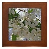 Apple Blossom Framed Tile
