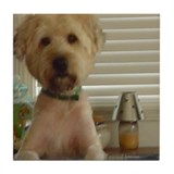 Wheaten Terrier Tile Coaster