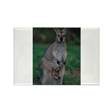 Wallaby Mother Carries Joey Magnets