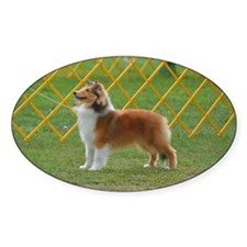 Sheltie at Attention Decal