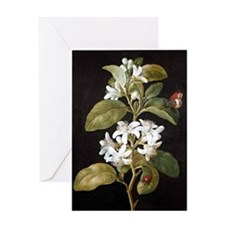 Pear Flower Greeting Card