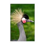 Grey Crowned Crane Posters