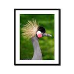 Grey Crowned Crane Framed Panel Print