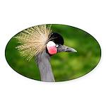 Grey Crowned Crane Sticker