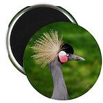 Grey Crowned Crane Magnets