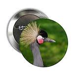 Grey Crowned Crane 2.25