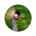 Grey Crowned Crane 3.5