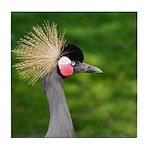 Grey Crowned Crane Tile Coaster
