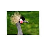 Grey Crowned Crane 5'x7'Area Rug