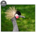 Grey Crowned Crane Puzzle