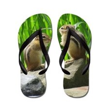 Two Chipmunks Flip Flops