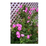 Roses and Trellis Postcards (Package of 8)