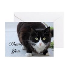 Thank You Cat Greeting Cards