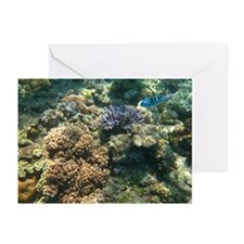 Fish Photo Greeting Cards (Pk of 10)