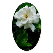 Gardenia Decal
