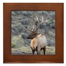bull elk Framed Tile