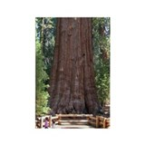Sequoia with Girls Rectangle Magnet