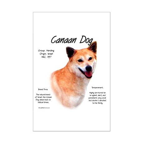Canaan Dog Mini Poster Print