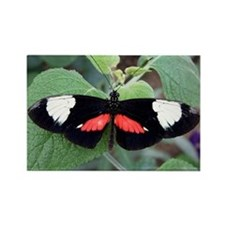 Butterfly 2 Rectangle Magnet