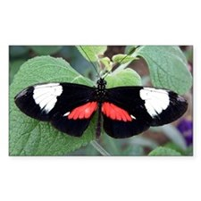Butterfly 2 Decal