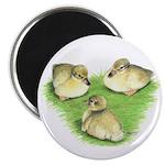 Snowy Mallard Ducklings Magnet